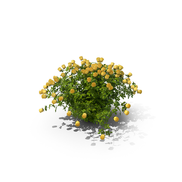 Yellow Rose Bush PNG & PSD Images