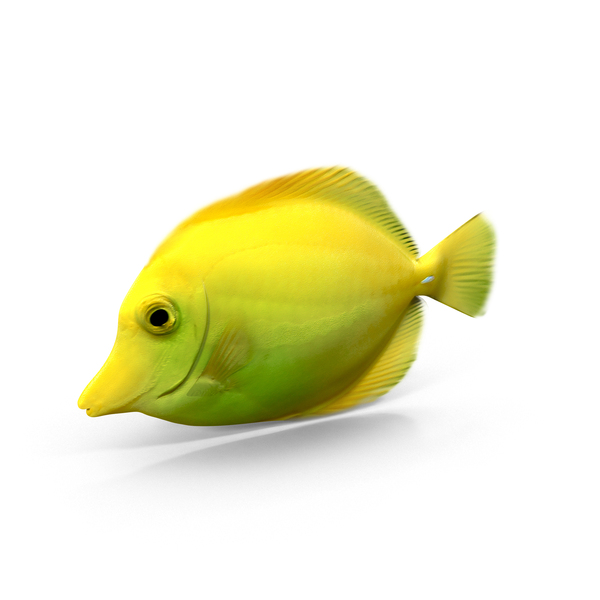 Yellow Tang Object