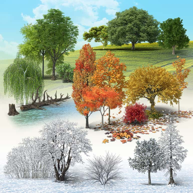 Deciduous Trees Collection